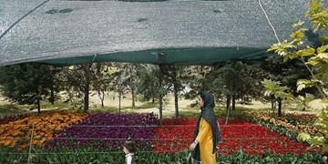 پیشنهاد تهرانگردی/پیادهروی تا خانه پرندگان مهاجر