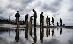 صید بیش از 3 هزار تن ماهی استخوانی در گیلان