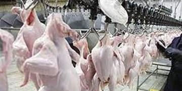 نبود مرغ در تولید مازاد برنیاز!/60درصد مرغ تولیدی از کهگیلویه خارج میشود