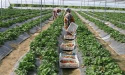 زمینهای خرد کشاورزی کشور را غیراقتصادی کرده است