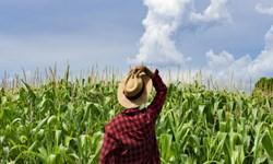 سفیدپوستان؛ مالک 98 درصد از زمین های زراعی آمریکا