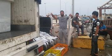 یال اسبی خلیج فارس، محبوب شرقیها/ تجار چینی مشتری اصلی «اَسپَک»+عکس