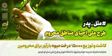 کاشت ۱۵ هزار نهال در مناطق محروم به همت مدرسه دانشجویی قرآن و عترت