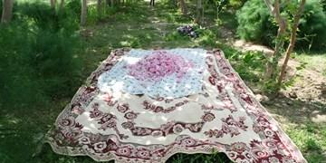 جشنواره  گلاب گیری در زابل