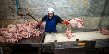 عرضه ناچیز مرغ در بازار بوشهر/ مرغ فروشان: دولت به تعهداتش عمل نکرد