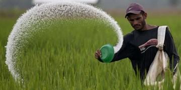 گرانی کود، زخمی بر کشت سالانه کشاورزان خراسان شمالی