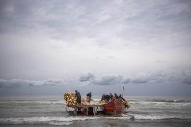 بیرون کشیدن اخرین پره های صید ماهی در سواحل ساری
