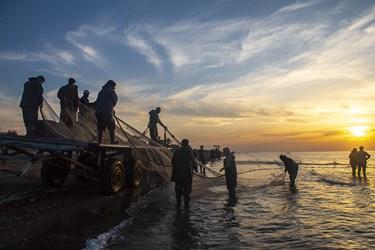 اخرین روز های صیدماهی توسط صیادان در سواحل ساری