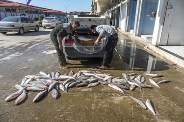اخرین فروش ماهیان دریای توسط صیادان در بازار ماهی فروشان ساری