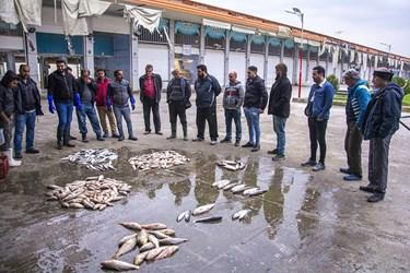 قیمت گزاری ماهی ها توسط فروشندگان که با (چوب زنی) نامبرده میشود