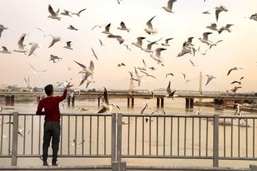 پرندگان پل سفید اهواز