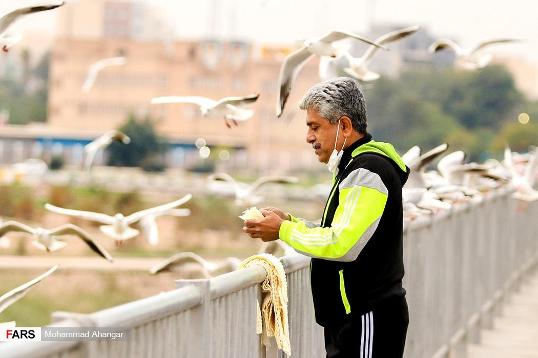 حضور پرندگان مهاجر در رودخانه کارون و پل سفید سبب ایجاد جاذبه گردشگردی برای مردم شهر اهواز، مرکز استان خوزستان میشود
