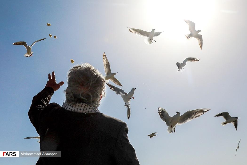 این پرندگان كه بیشتر آبزی و كنار آبزی هستند به سمت آب های خوزستان مهاجرت كرده و عمدتا در آبگیرها و تالاب های استان دیده می شوند.