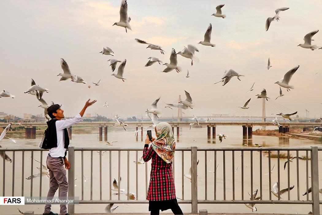 پرندگان پل سفید افراد زیادی از مردم در طول روز برای تماشا و غذا دادن به پرندگان به پل سفید اهواز میروند.