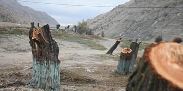 دستدرازی به طبیعت؛ قطع درختان به بهانه سرمایهگذاری گردشگری