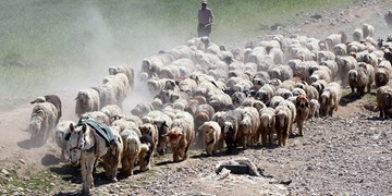 کوچ عشایر خوزستان به استانهای سردسیر