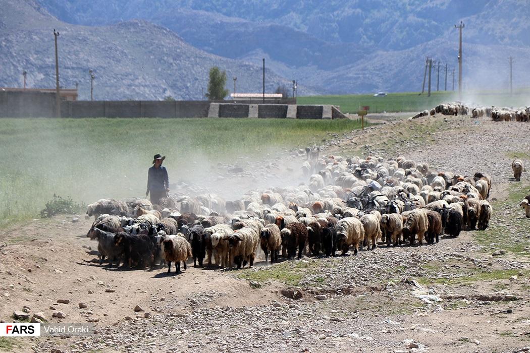 کوچ عشایر خوزستان به استانهای مناطق سردسیری