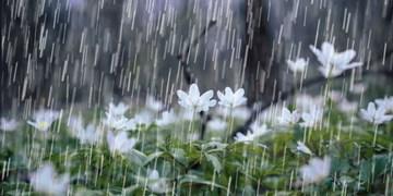 باران و صاعقه در راه مازندران/ احتمال جاری شدن روانآب