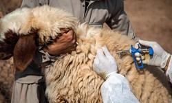 میزگرد فارسمن  دامپزشکان: اعتبار واکسنهای دام تامین شود/ ضرورت نظارت بر کشتارگاههای گوشتهای وارداتی