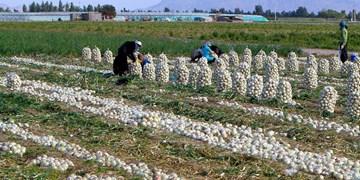 دومین اقدام هیأتیها برای حذف موانع تولید و خوشحالی کشاورزان؛ این بار در کرمان