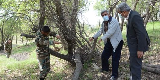 علت قطع درختان بلوط منطقه مختار بویراحمد/ مجوزهایی که بلای جان منابع طبیعی شده است+ تصاویر