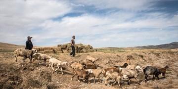 خسارت ۳۰۰ میلیاردی خشکسالی به عشایر خراسانجنوبی