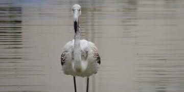 پرندگان مهاجر مهمان  گرمهایها شدند