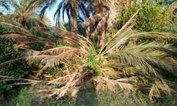 خسارت 160 میلیارد تومانی تگرگ و طوفان به کشاورزی فهرج
