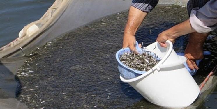 14000129000082 Test PhotoN - تولید سالانه بیش از ۹ هزار تن ماهی در اردبیل/ بچه ماهی رایگان در برخی واحدها توزیع خواهد شد