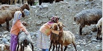 بحران خشکسالی و خوراک دامها در خراسانجنوبی/ در شرایط فعلی ۲۰ تن نهاده هم پاسخگوی نیاز دام نیست