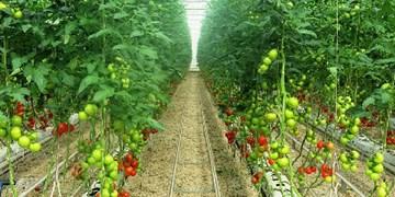 حل مشکلات گلخانهداران مستقر در فرودگاه یاسوج پس از چند سال