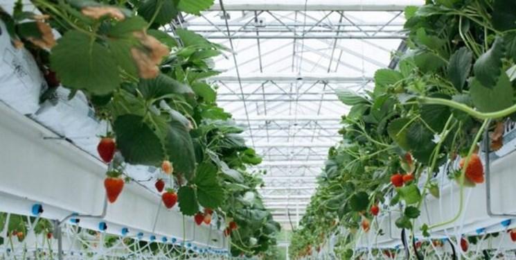 بهرهبرداری از نخستین گلخانه هیدروپونیک صنعتی در سلطانیه