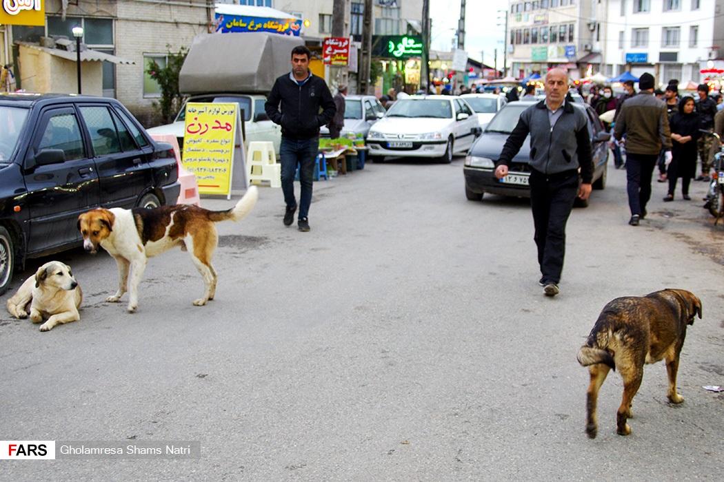 پرسه سگهای ولگرد در بازار شهر چالوس
