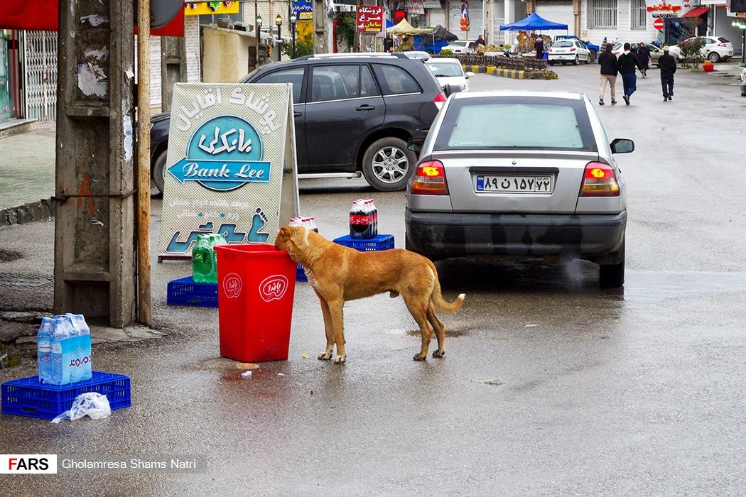 سگهای ولگرد براي سير نگهداشتن خود از سطل هاي آشغال تغذیه می کنند