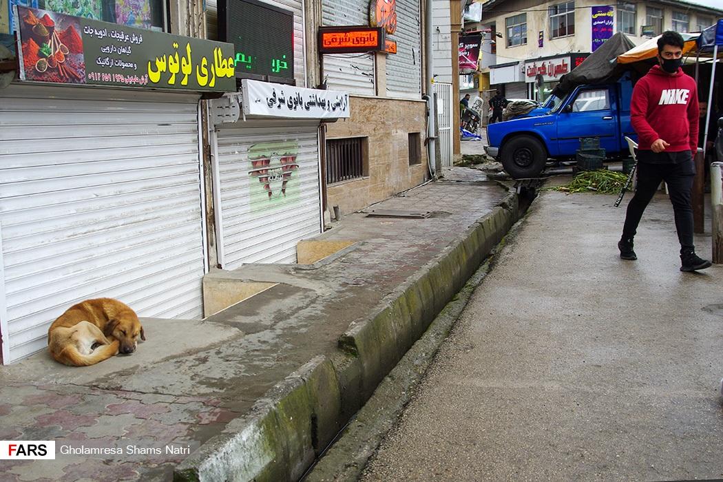 حضور اين سگ ها در شهر موجب مزاحمت براي شهروندان  شده است