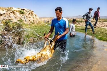 هر ساله با شروع فصل بهار و گرم شدن هوا، اهالی منطقه فیروزآباد شهری در ۱۱۰ کیلومتری جنوب شیراز كه به دامداری و دامپروری مشغول هستند، در یک كار فصلی دیرینه به نام «چهره گران» یا پشم چینی گوسفندان، اقدام به شستن و چیدن پشم گوسفندان میکنند.