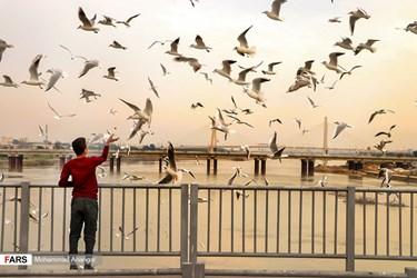 حضور پرندگان مهاجر در رودخانه کارون و پل سفید که از اوایل پاییز سبب ایجاد جاذبه گردشگردی برای مردم شهر اهواز در استان خوزستان میشود. مردم اهواز در طول این مدت پذیرایشان هستند و در طول روز شاهد غذا دادن مردم به پرندگان هستیم.