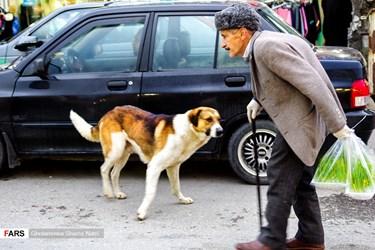 سگهای ولگرد آزادنه در شهر چالوس از اين سو به آن سو میروند وعلاوه بر داشتن بيماریهای پوستي مانند «گال» موجب ترس و وحشت شهروندان در شهر چالوس میشوند.