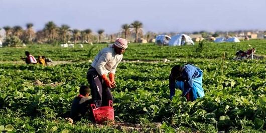 کلیپ| ورود کشاورزان مهاجر ممنوع