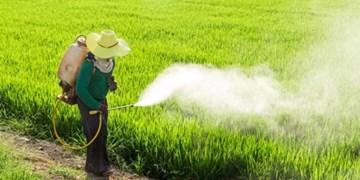 مبارزه با سن غلات در اراضی کشاورزی سمنان