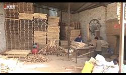 فیلم| مهاجرت معکوس به بیجار به برکت «بنیاد برکت»
