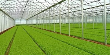 طراحی و ساخت گلخانههای نوین توسط دانشبنیانها
