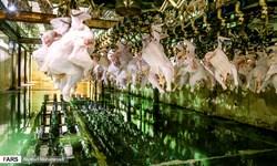 کشف تخلفات ۶ میلیاردی در بازار مرغ یزد