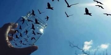 کمک  85 میلیاردی خیّران آذربایجانشرقی  برای آزادی زندانیان