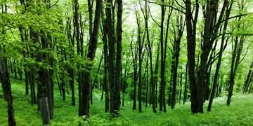 موقوفه بودن جنگلهای آقمشهد نقض شد/ابلاغ رای دیوان عالی طی چند روز آینده