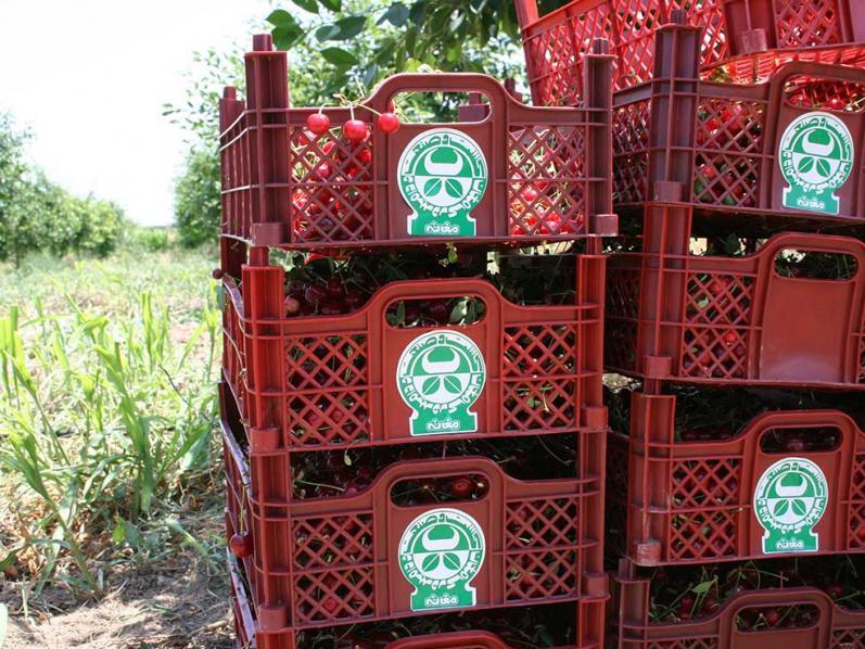 14000207000809 Test NewPhotoFree - تحول و پویایی در کشت و صنعت مغان با ورود دستگاه قضایی؛ از رشد ۲۰ درصدی میزان تولیدات تا رکورد تولید روزانه ۱۹۰ تن شیر