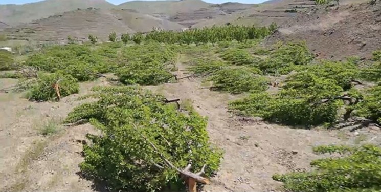آخرین جزئیات پرونده قطع درختان باغدار سنندجی/ پیگیریها با جدیت ادامه دارد