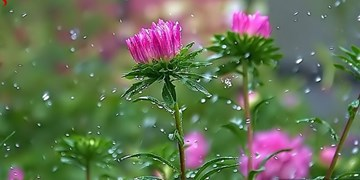 باد شدید در تهران و ادامه بارانهای بهاری در کشور/بارشها تاکنون 55درصد کمتر از سال زراعی قبل