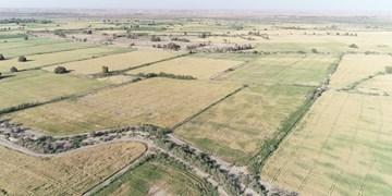 قلعهگنج از قطبهای تولید «گندم» در کرمان فاقد سیلو/نارضایتی کشاورزان از خسارت انتقال محصول