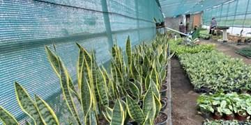 از تبدیل زمین بایر به گلخانهای بزرگ تا اشتغالزایی برای بانوان کمدرآمد روستا